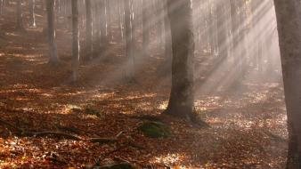 Sun trees wood leaves beams sticks autumn wallpaper