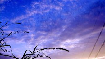 Sunset clouds grass skyscapes skies wallpaper