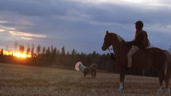 Sunset dogs fields horses western ponies nomi wallpaper
