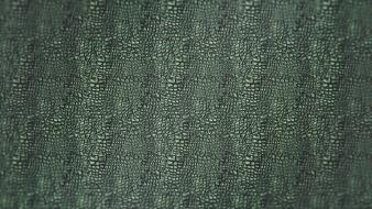 Textures alligators skin wallpaper