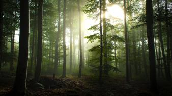 Trees forest germany sunlight hdr photography pine Wallpaper