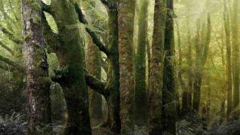 Trees wood old trunks moss ancient bark wallpaper