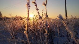 Winter snow frost natural wallpaper