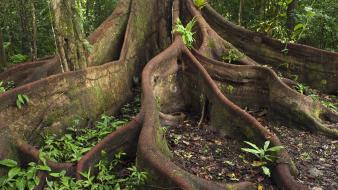 Amazon roots ecuador eastern wallpaper