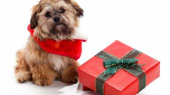 Animals dogs gifts wallpaper
