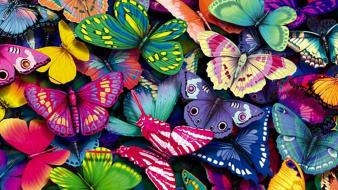 Colors butterflies Wallpaper