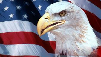 Eagles flags usa american flag birds wallpaper