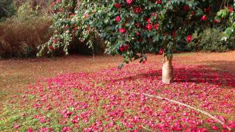 Earth flowers nature red trees wallpaper