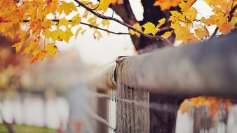Fences leaves depth of field barbed wire wallpaper
