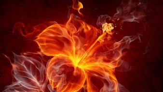 Flowers fire flower Wallpaper