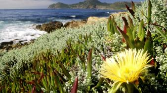 Flowers south africa national park cape town Wallpaper