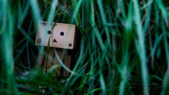 Green lonely danboard boxes wallpaper