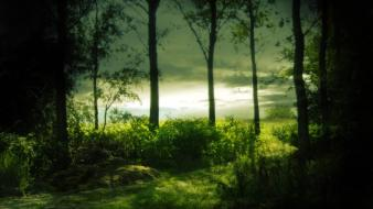 Green nature trees forest mysterious wallpaper