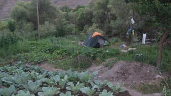 Green turkey riverside laundry camping cabbages erzurum tent Wallpaper