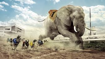 Humor dogs funny elephants races photomanipulation fun wallpaper