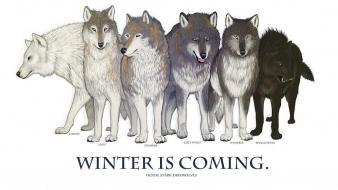 Is coming direwolf ghost house stark wolves Wallpaper