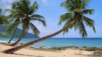 Landscapes beach sand palm trees virgin islands wallpaper