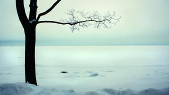 Landscapes nature snow cold branches wallpaper