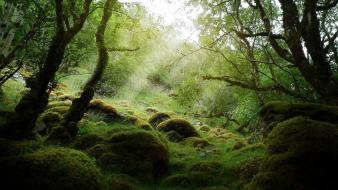 Landscapes trees forest stones moss wallpaper