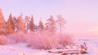 Landscapes winter snow trees pink wallpaper