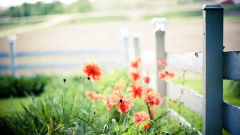 Nature flowers fences red Wallpaper