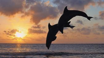 Sunset animals jumping islands dolphins bay sea wallpaper