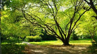 Trees flora parks wallpaper
