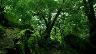 Trees jungle forest moss wallpaper