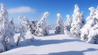 Winter snow trees covered Wallpaper