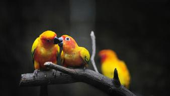 Birds parrots affection branches wallpaper