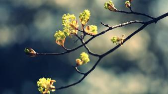 Blossom twig wallpaper