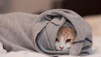 Cats animals hidden clothes wallpaper