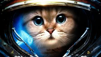 Cats starcraft ii Wallpaper
