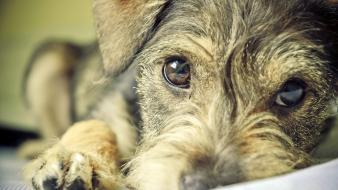 Close-up eyes animals dogs portraits Wallpaper