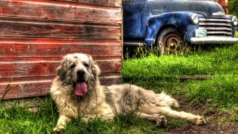 Dogs trucks hdr photography barn vibrant farm Wallpaper