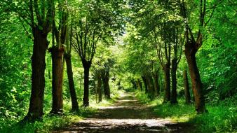 Green nature trees forests paths Wallpaper