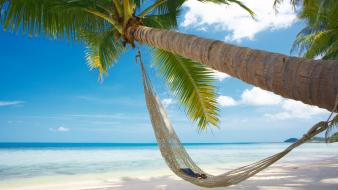 Landscapes nature beach hammock palm trees Wallpaper