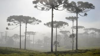 Landscapes trees forest fog south america wallpaper