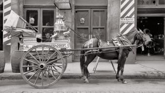 Milk horses grayscale historical wheels new orleans Wallpaper