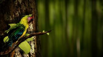 Nature parrots birds wallpaper