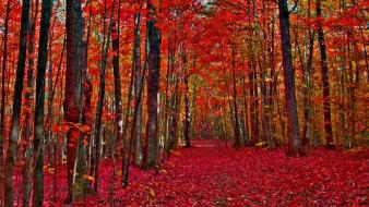 Nature trees autumn (season) forest fallen leaves wallpaper