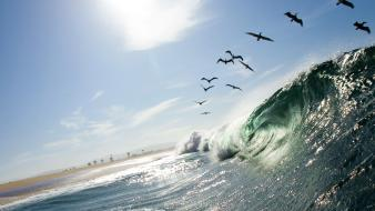 Nature waves california national geographic pelican seascapes birds wallpaper