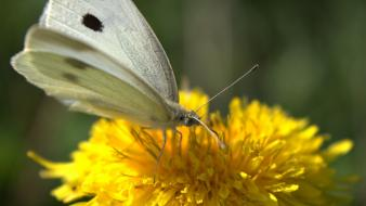 Wings flowers yellow insects macro butterflies wallpaper