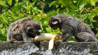 Animals leaves bananas monkeys eating wallpaper