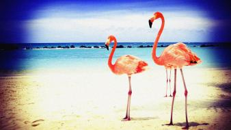 Beach flamingos lomo lomography wallpaper
