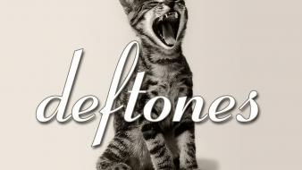 Deftones screaming kittie wallpaper