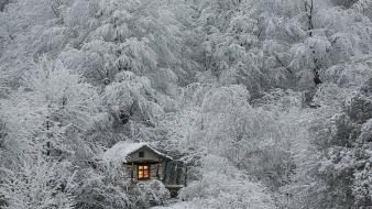 Frost cabin house cottage branches view lovely wallpaper