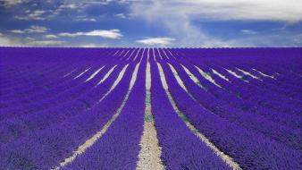 Nature fields france lavender provence Wallpaper