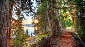 Nature forest around the path crater lake Wallpaper
