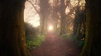 Nature forest path sentinel wallpaper